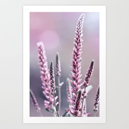 Summer flowers 300 Art Print