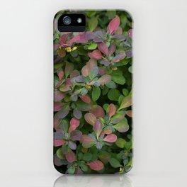 Japanese Barberry Leaves iPhone Case