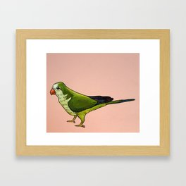 Monk Parakeet on Pink Framed Art Print