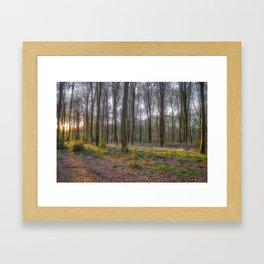 The Bluebells. Framed Art Print