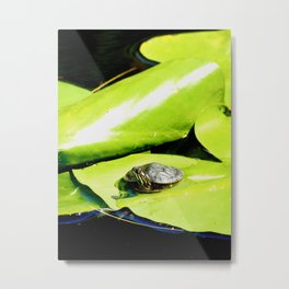 Tiny baby turtle on lilypad Metal Print