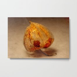 Physalis Part III. Metal Print