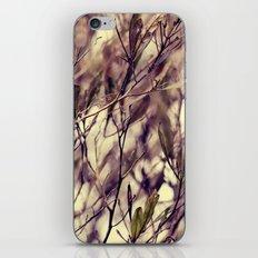 Patterns in my Winter Garden iPhone & iPod Skin