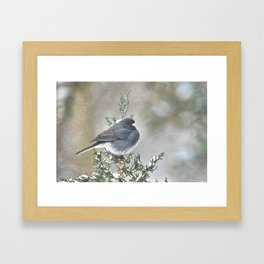 Tip Top Junco Framed Art Print