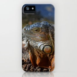 Mysterious Iguanas #1 captured by Jo DiLorenzo iPhone Case
