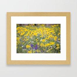 Meadow Gold - Wildflowers in a Mountain Meadow Framed Art Print