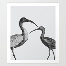 Ibis Birds Art Print