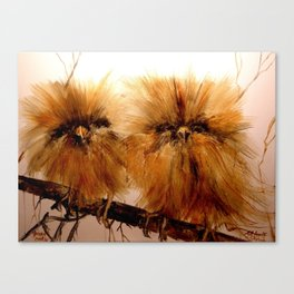 Young Owls Canvas Print