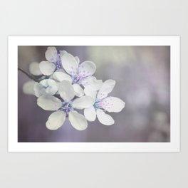 Delicate blossom Art Print