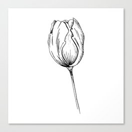 Tulip sketch. Single hand drawn tulip flower isolated on white background. Graphic illustration. Canvas Print