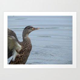 Duck take-off Art Print