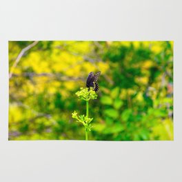 Spicebush Swallowtail Butterfly Rug