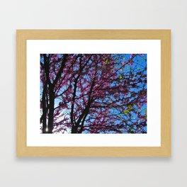 Blossom (1) Framed Art Print
