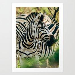 Zebra 1 Art Print