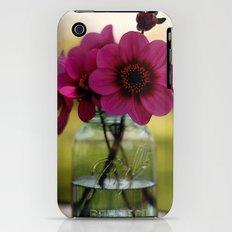 Dahlias In A Blue Jar iPhone (3g, 3gs) Slim Case