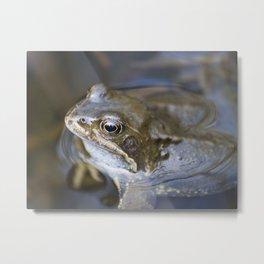 Croak the frog Metal Print