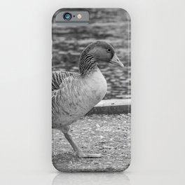 Greylag goose on the bank of the River Bure, Wroxham iPhone Case
