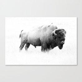 Bison - Monochrome Canvas Print