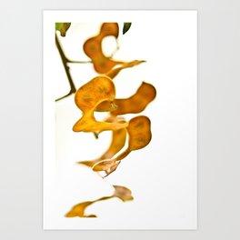 Seedpods Art Print