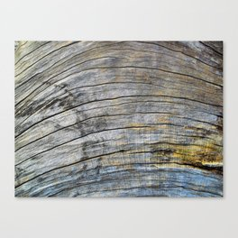 Jersey Wind I Canvas Print
