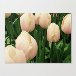 Tiny Tulips Canvas Print
