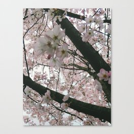 In Bloom '17 Canvas Print