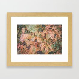 Autumn ground Framed Art Print