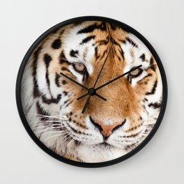 Tiger Portrait Wall Clock