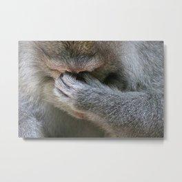 Jaded Monkey Metal Print