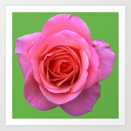 bed of roses: hot pink, neon green Art Print