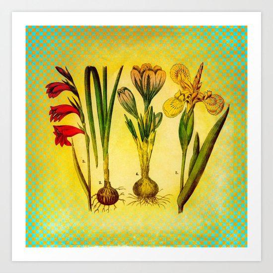 Garden Bulbs Art Print