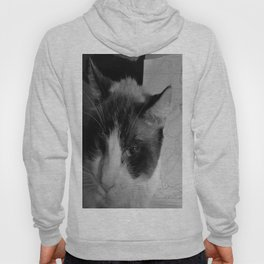Cats...Not Caring in the History of Ever Hoody