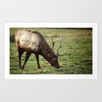 elk Art Prints featuring Elk by Ian Terpin