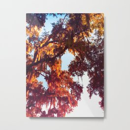 Autumn Aesthetic Fall Nature Tree with Burgundy Orange Yellow Leaves and Blue Sky Metal Print