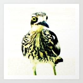 Curlew Bird Art Print