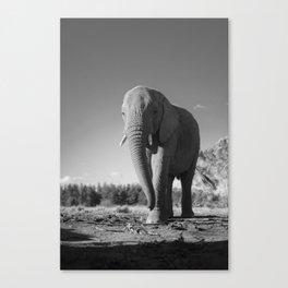 Sally the Elephant Canvas Print