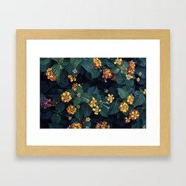 Beautiful flowers over my neighborhood Framed Art Print