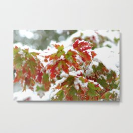 Holiday colors in a clash of seasons Metal Print