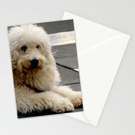 See My New Paw-dicure? Stationery Cards