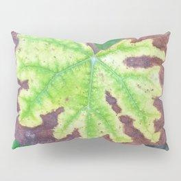Vine Leaf in autumn fall closeup Pillow Sham