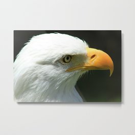 Face of an Eagle Metal Print