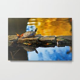 Turtle on the stone Metal Print