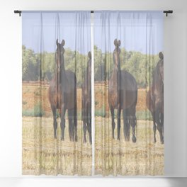 Two Big Horses One Cute Pony On Meadow Ultra HD Sheer Curtain