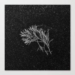 Sea Plant on Sand Canvas Print