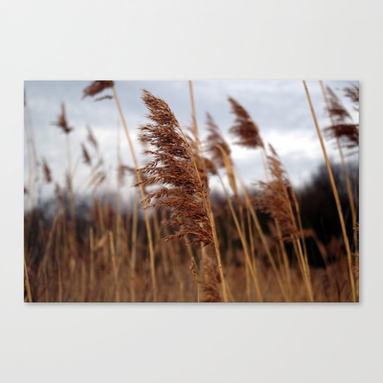 stay in the wind. Canvas Print