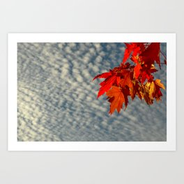 Evening Sky in The Fall by Teresa Thompson Art Print