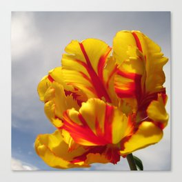 Yellow Tulip Galoire Canvas Print