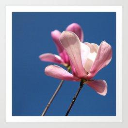 Pink flower in bloom Art Print