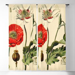 Poppy picture from 1900 Blackout Curtain