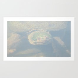 Snapping Turtle (ONE) Art Print